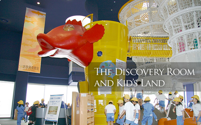 The Discovery Room and Kid's Land